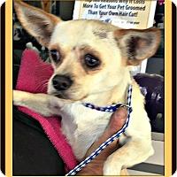 Adopt A Pet :: Bennie - Murrieta, CA
