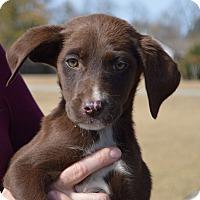 Adopt A Pet :: Molly - CRANSTON, RI