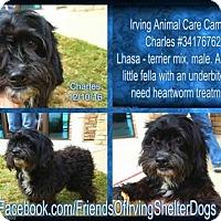 Adopt A Pet :: Charles - Irving, TX