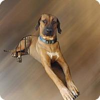 Adopt A Pet :: Zeke - Citrus Springs, FL