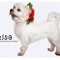 Adopt A Pet :: Elsa - Sherman Oaks, CA