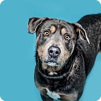 Adopt A Pet :: Bowser - Monroe, MI