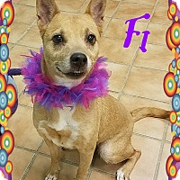 Adopt A Pet :: Fi is ADOPTED - Buffalo, IN