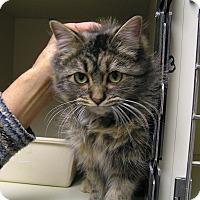 Adopt A Pet :: Birch - Creston, BC
