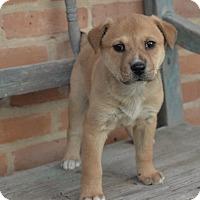 Adopt A Pet :: Seeley - San Antonio, TX