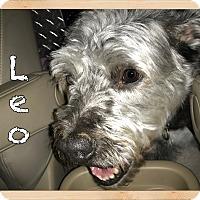 Adopt A Pet :: Leo - Orlando, FL