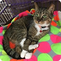Adopt A Pet :: Hopscotch - Hamburg, NY