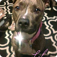Adopt A Pet :: Lola-Adoption Pending - Des Moines, IA