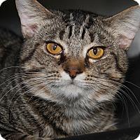 Adopt A Pet :: Gus - Marietta, OH