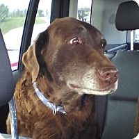 Adopt A Pet :: Layla & Gage #2 - Midlothian, VA