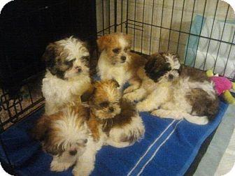 Rescue Dogs Ogden Utah