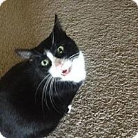Adopt A Pet :: K.C. - Chandler, AZ