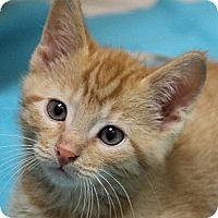 Adopt A Pet :: Sean - Chicago, IL