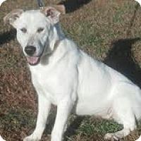 Adopt A Pet :: Puddin Pop ($150off) - Staunton, VA