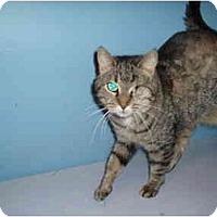 Adopt A Pet :: Mila - Hamburg, NY