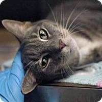 Adopt A Pet :: Nala - New York, NY