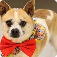 Adopt A Pet :: Brenner - Lebanon, CT