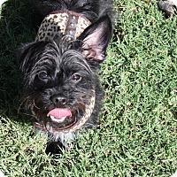 Adopt A Pet :: Leo - Henderson, NV