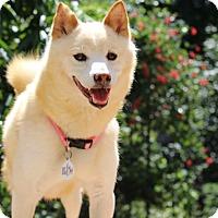 Adopt A Pet :: Yoko - Manassas, VA