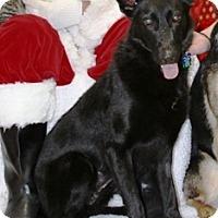 Adopt A Pet :: Kiki - Denver, CO