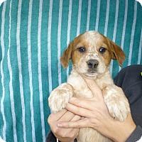 Adopt A Pet :: Halle - Oviedo, FL