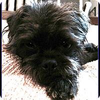 Adopt A Pet :: POSEY - ADOPTION PENDING - Seymour, MO