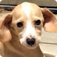 Adopt A Pet :: TIGER (video) - Los Angeles, CA