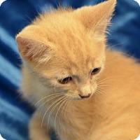Adopt A Pet :: Vincent161186 - Atlanta, GA