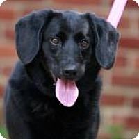 Adopt A Pet :: Casey - Kettering, OH