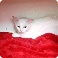 Adopt A Pet :: Bella Rose - Seminole, FL
