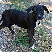 Adopt A Pet :: Morty - Rockingham, NH