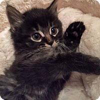 Adopt A Pet :: Ranger - Troy, MI