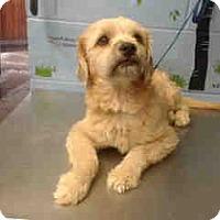 Terrier (Unknown Type, Small) Mix Dog for adoption in San Bernardino, California - URGENT on 10/13 SAN BERNARDINO