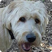 Adopt A Pet :: Jack - Alpharetta, GA