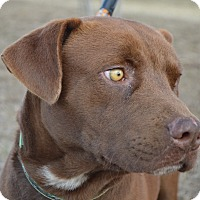 Adopt A Pet :: Blue - Seabrook, NH