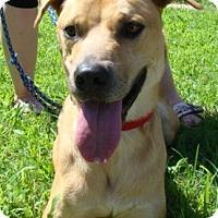 Adopt A Pet :: George - Rosalia, KS