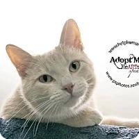 Adopt A Pet :: Brody - Belton, MO