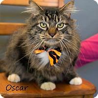 Adopt A Pet :: Oscar - La Porte, IN