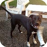 Adopt A Pet :: Hobie - Pt. Richmond, CA