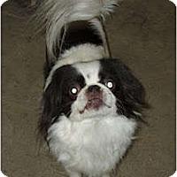Adopt A Pet :: Yoshi - Richmond, VA
