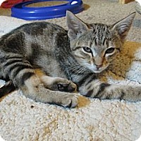 Adopt A Pet :: Faith - Richland, MI