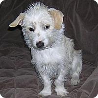 Adopt A Pet :: June - Seattle, WA