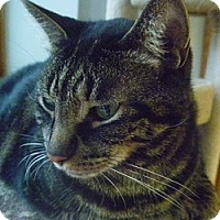 Adopt A Pet :: Robert - Hamburg, NY