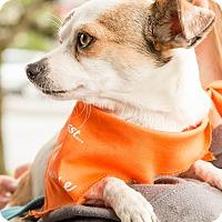 Adopt A Pet :: Lenore - Pitt Meadows, BC