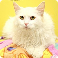 Adopt A Pet :: Josephine - Sterling Heights, MI
