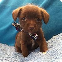 Adopt A Pet :: Theodore - Irvine, CA