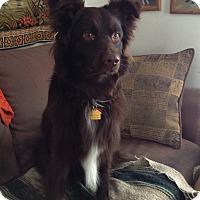Adopt A Pet :: Loki - Minneapolis, MN