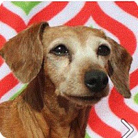 Adopt A Pet :: DAISY - Senior Low Fees - Red Bluff, CA