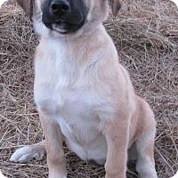 Adopt A Pet :: Reba - Hartford, CT