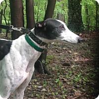 Adopt A Pet :: WW's Runninabout - Gerrardstown, WV
